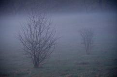 Blue misty morning Royalty Free Stock Photography