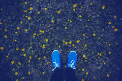 Blue moccasins on a flowering meadow Stock Image