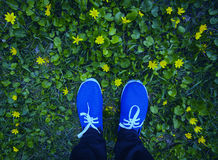 Blue moccasins on a flowering meadow royalty free stock photo
