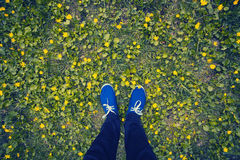 Blue moccasins on a flowering meadow Royalty Free Stock Image