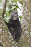 Blue Monkey. stock image