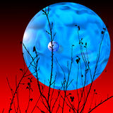 Blue Moon Royalty Free Stock Photos