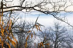 Blue morning foggy scene with leafless branches. A blue early morning look through leafless limbs with yellow oblong leaves in the foreground stock images
