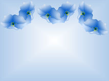 Blue Morning Glories. Delicate blue Morning Glories on gradient background with center and bottom space Royalty Free Stock Image