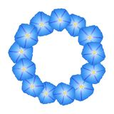 Blue Morning Glory Flower Wreath. Vector Illustration.  vector illustration