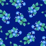 Blue Morning Glory on Navy Blue Background. Vector Illustration.  vector illustration