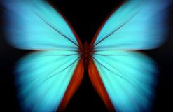 Blue morpho - abstract