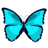 Blue morpho the butterfly monarch. vector illustration Royalty Free Stock Images