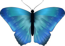 Blue morpho butterfly, vector Stock Images