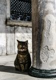 Blue Mosque in Istanbul cat and pillar Stock Photos