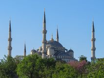 Blue Mosque in Istanbul, immersed in greenery stock image