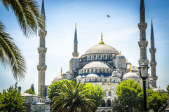 Blue Mosque of Istanbul. Blue mosque with palm trees in forground Stock Images