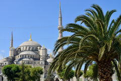 Blue Mosque with Palm Royalty Free Stock Images