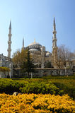 Blue Mosque (Sultanahmet Camii). Stock Photo