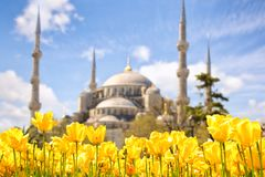 Blue Mosque and Tulip Festival Royalty Free Stock Image