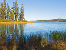 Blue mountain lake with trees and grasses. The clear blue water of Waldo Lake, Oregon with forested shore and marsh grasses Stock Images