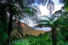 Free Blue Mountain, NSW, Australia Royalty Free Stock Photos - 3185258
