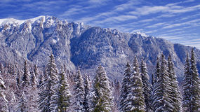 Blue Mountain Top. Snowy mountain in winter, blue sky and fir trees Stock Image