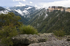 Blue mountains. Australia. stock images