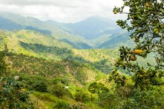 Blue mountains of Jamaica where coffee is grown. At day Royalty Free Stock Photography