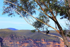 Blue Mountains landscape detail with bird Royalty Free Stock Photography
