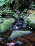 Blue Mountains National Park, UNESCO, Australia Royalty Free Stock Images