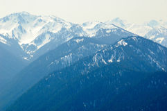 Blue mountains and snow capped peaks. At Hurricane Ridge in Olympic National Park Royalty Free Stock Images