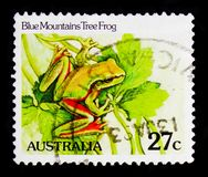 Blue Mountains Tree Frog Litoria citropa, Reptiles and Amphibes serie, circa 1982. MOSCOW, RUSSIA - OCTOBER 3, 2017: A stamp printed in Australia shows Blue Royalty Free Stock Image