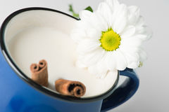 Blue mug with milk and cinnamon sticks. Closeup of flower in a blue mug with milk and cinnamon sticks Royalty Free Stock Photo