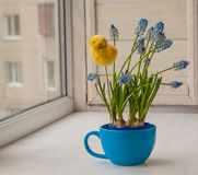 Blue muscari in blue cup  with  decorative sticker chicken Stock Images