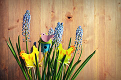 Blue Muscari flowers Stock Images