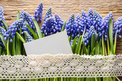 Blue muscari flowers (Grape hyacinth) on wood Royalty Free Stock Image