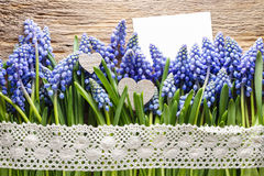 Blue muscari flowers (Grape hyacinth) on wood Stock Image