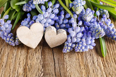 Blue muscari flowers (Grape Hyacinth) on wood Stock Photography