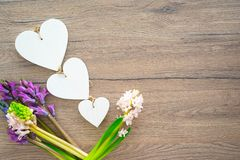 Blue muscari flowers, Grape Hyacinth, on wooden background with three white hearts stock photo