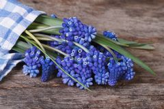 Blue muscari flowers wrapped in a napkin Royalty Free Stock Photos