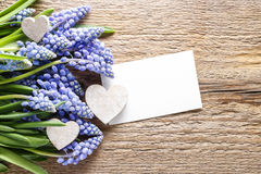 Blue muscari flowers & x28;Grape Hyacinth& x29; on wooden background Stock Photo