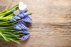 Blue muscari flowers & x28;Grape Hyacinth& x29; on wooden background Stock Image
