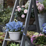 Blue muscari on the stairs for sale near the flower shop Royalty Free Stock Photo