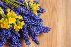 Blue muscari and yellow primula flowers on a wooden background with copy space Royalty Free Stock Photo