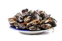 Blue mussel bivalve Stock Images