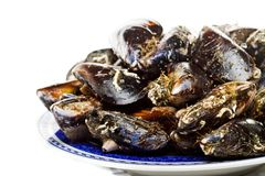 Blue mussel bivalve Stock Image
