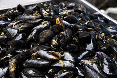 Blue Mussel on Fresh Food Market Stock Images