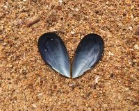 Blue mussel heart Stock Photography