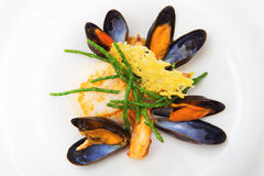 Blue mussels Stock Photos