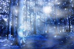 Blue mystic forest. With lights and magic colors Royalty Free Stock Images