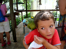 Blue-naped parrot is trying to steal food from a boy stock photography