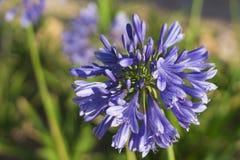 Blue-2 Natur und Landschaften stockfoto