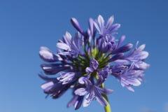 Blue-3 Nature et horizontaux image libre de droits