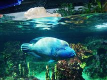 Blue. Nature fish aquarium sea world Royalty Free Stock Photos